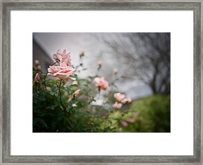 The Rose Garden Framed Print by Linda Unger