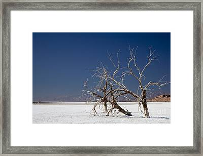 The Salton Sea Framed Print by Jim West