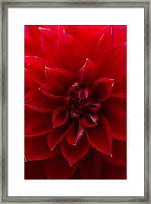 The Scarlet Flower Framed Print by Kathleen Odenthal