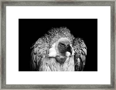 The Scavenger Framed Print by Chris Whittle