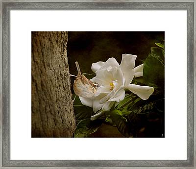 The Scent Of The Gardenia Framed Print by Jai Johnson