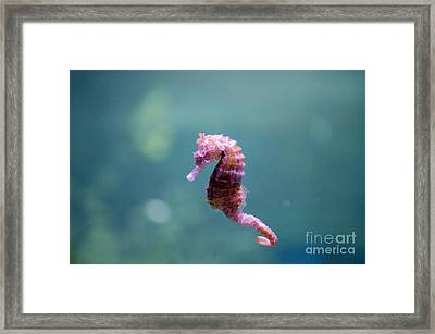 The Seahorse Framed Print by Nathan Heldman