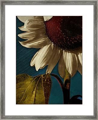 Sunflower Framed Print by Bernie  Lee