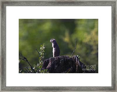 The Sentry Framed Print by Mike  Dawson
