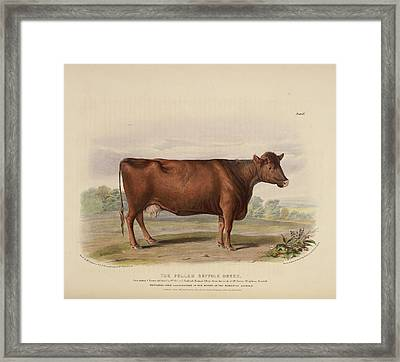 The Sheeted Breed Of Somersetshire Framed Print by British Library
