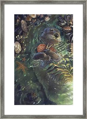 The Shell Collector Framed Print by Jaimie Whitbread