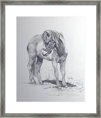 The Shetland Framed Print by James Skiles