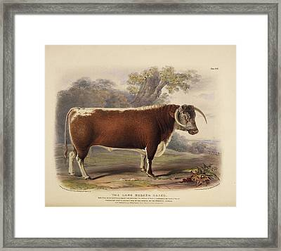The Short Horned Breed Framed Print by British Library