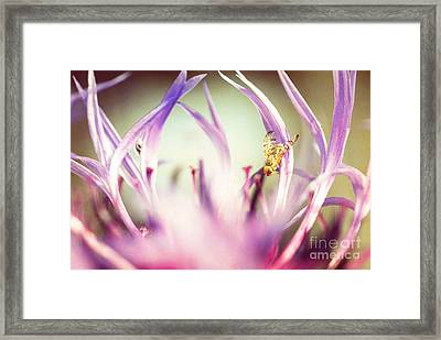 The Small Visitor Framed Print by Hannes Cmarits