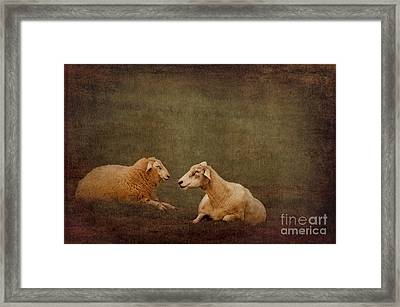 The Smiling Sheeps Framed Print by Angela Doelling AD DESIGN Photo and PhotoArt