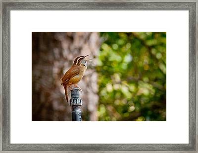 The Songbird Framed Print by Linda Unger