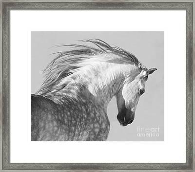 The Spanish Stallion Tosses His Head Framed Print by Carol Walker