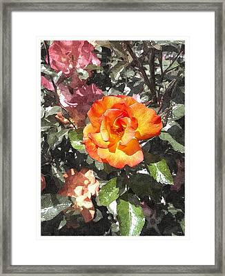 The Spring Rose Framed Print by Glenn McCarthy Art and Photography