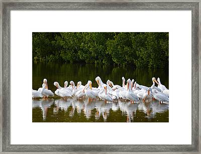 The Squadron Framed Print by Jimi Bush