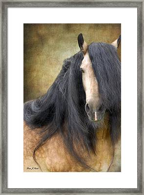 The Stallion Framed Print by Fran J Scott