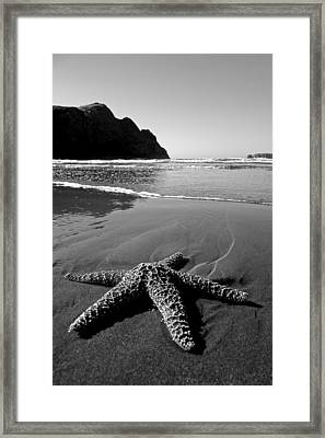 The Starfish Framed Print by Peter Tellone