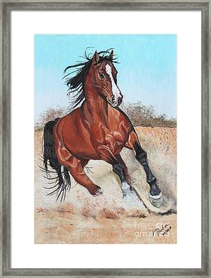 The Steed Framed Print by Jim Barber Hove