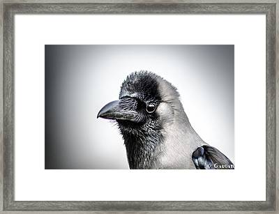 The Story Of Crow Framed Print by Gautam Gupta