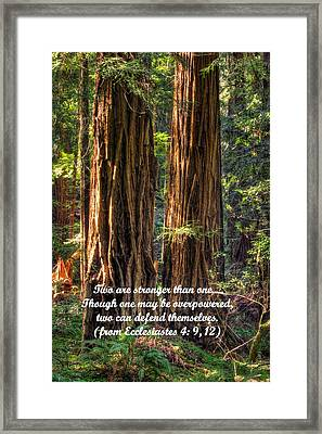 The Strength Of Two - From Ecclesiastes 4.9 And 4.12 - Muir Woods National Monument Framed Print by Michael Mazaika