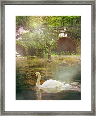 The Swan Lake Framed Print by Pati Photography