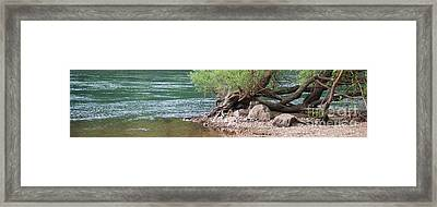 The Tangled Tree Framed Print by Julie Clements