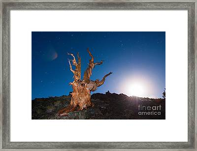 The Test Of Time - Lightpainting The Ancient Bristlecone Pine Tree With Star Trails. Framed Print by Jamie Pham