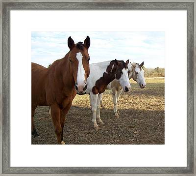 The Three Amigos Framed Print by Cherie Haines