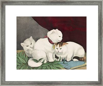 The Three White Kittens Circa 1856 Framed Print by Aged Pixel