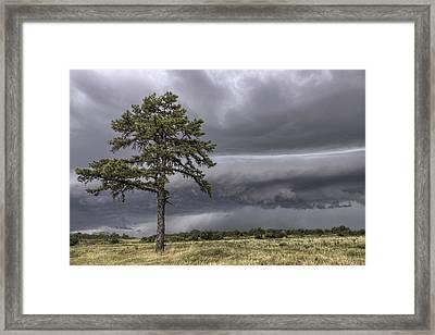 The Thunder Rolls - Storm - Pine Tree Framed Print by Jason Politte