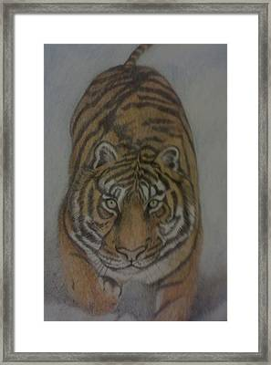 The Tiger Framed Print by Christy Saunders Church