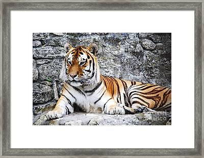 The Tiger Framed Print by Jelena Jovanovic