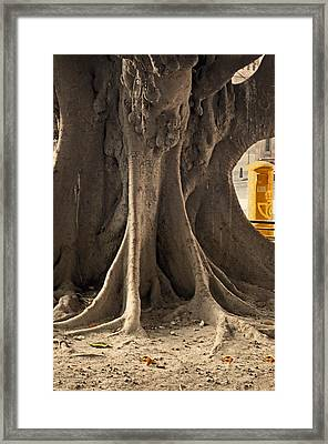 The Tree And The Post Box Framed Print by Mary Machare