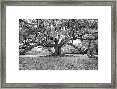 The Tree Of Life Monochrome Framed Print by Steve Harrington