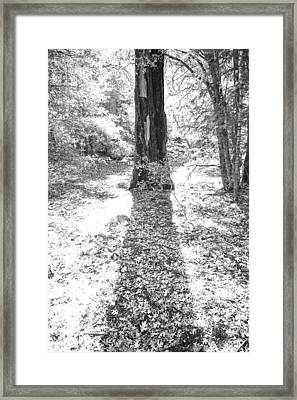 The Tree Framed Print by Peter Tellone