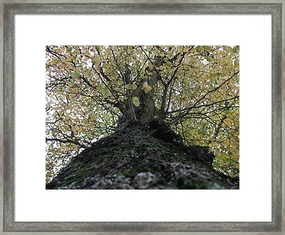 The Tree Framed Print by Tony Stark