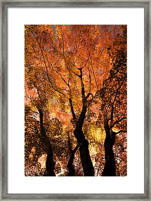 The Trees Dance As The Sun Smiles Framed Print by Don Schwartz