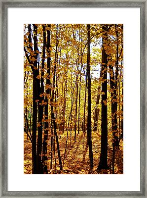 The Trees Through The Forest Framed Print by Anthony Doudt