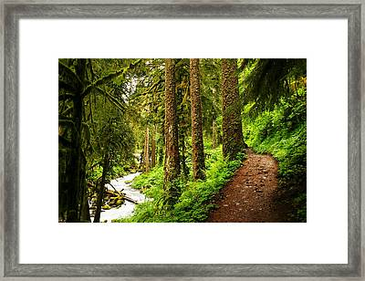 The Twisting Path Winding Through Paradise  Framed Print by Jeff  Swan