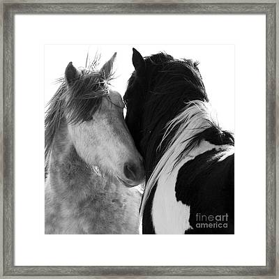 The Two Stallions Framed Print by Carol Walker
