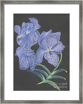 The Vanda Orchid Framed Print by Carol Wisniewski