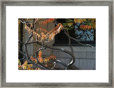 The View Framed Print by Joseph Yarbrough