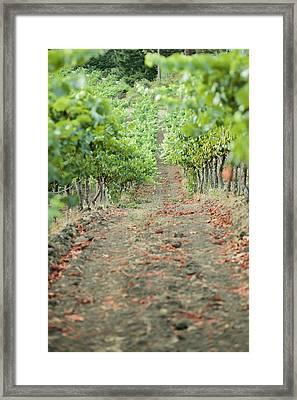 The Vines Framed Print by Ariane Moshayedi