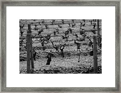 The Vineyard Framed Print by Chris Whittle