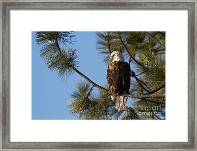 The Watchman Framed Print by Beve Brown-Clark Photography