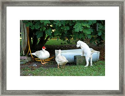 The Watering Hole Framed Print by Scott Hansen
