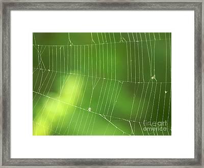 The Web Framed Print by Roman Milert