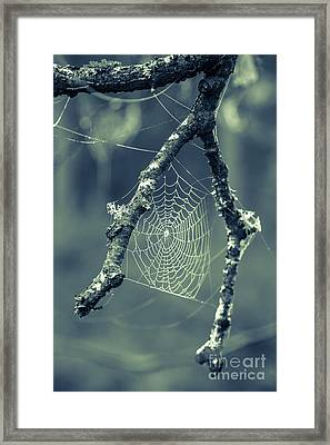 The Webs We Weave Framed Print by Edward Fielding