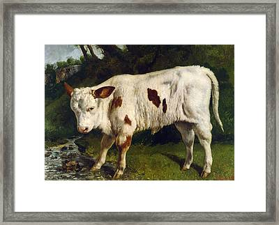 The White Calf Framed Print by Gustave  Courbet