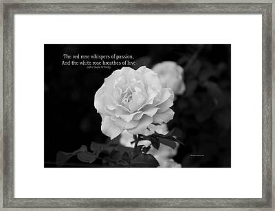 The White Rose Breathes Of Love Framed Print by Thomas Woolworth
