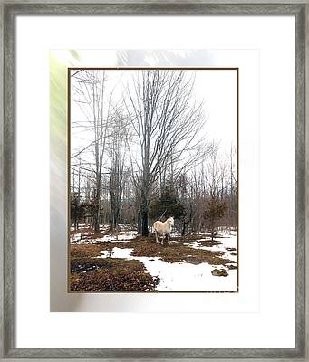 The White Stallion On A Snowless  Mound Framed Print by Patricia Keller